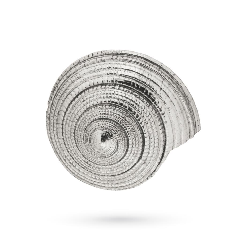 Conchiglia Architectonica Perspectiva ricoperta in argento 925 - ITALO GORI