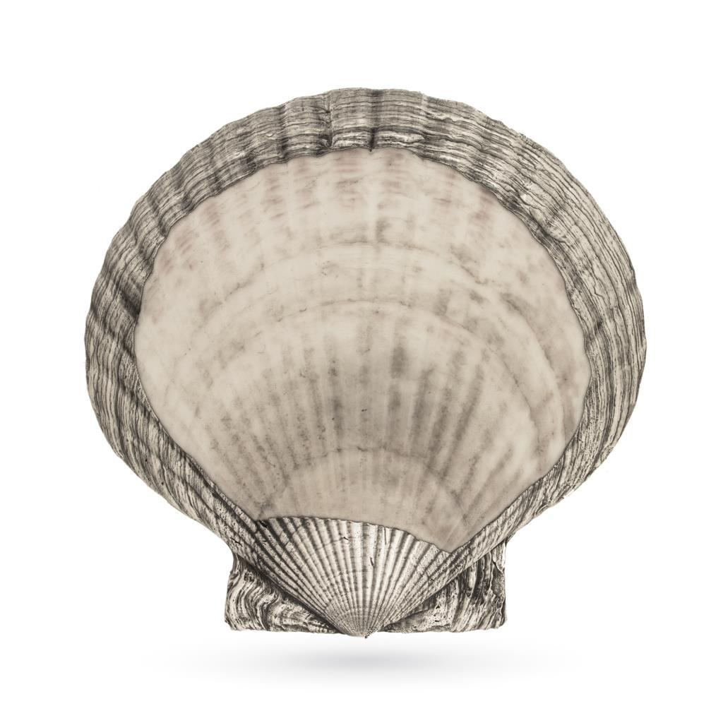 Conchiglia Pecten Yessoiensis ricoperta in argento 925 - ITALO GORI